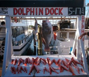 fishing in texas dolphin dock